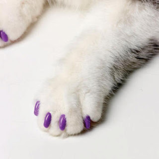 faux ongles pour chats